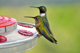 Hummingbird, SEO and Social Media Management Tools: j+ Tweets Roundup